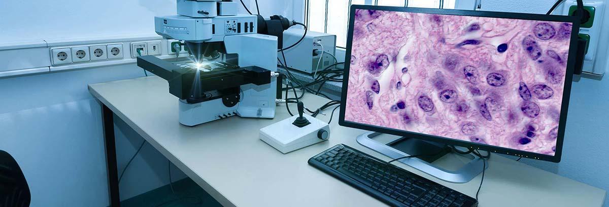 Un ordinateur et microscope